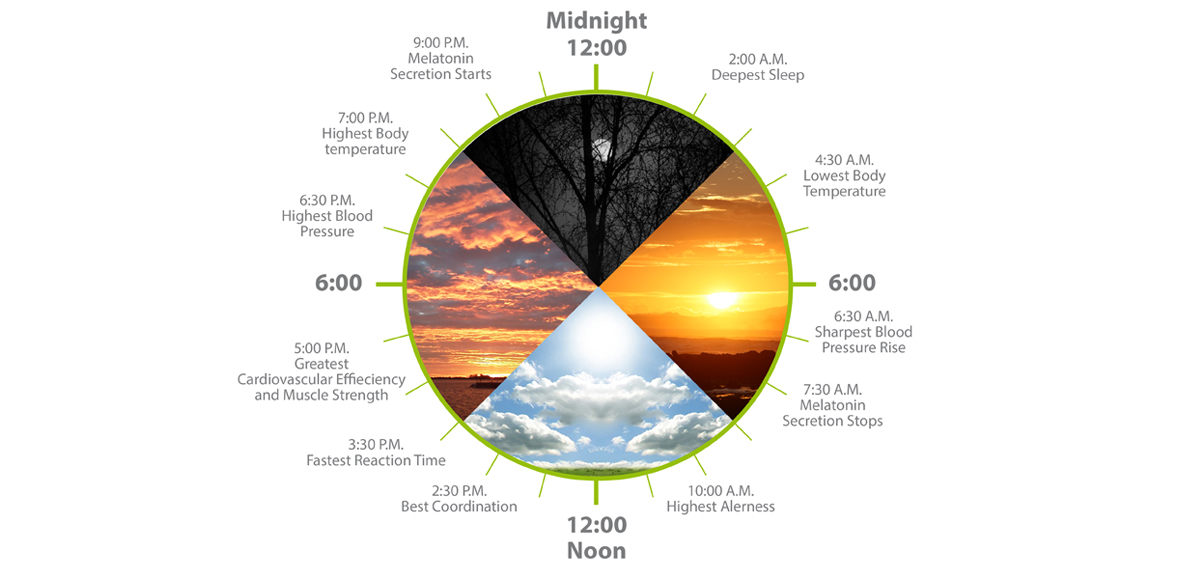 explanations of circadian rhythms Biological clock affects the daily rhythm of many physiological processes this diagram depicts the circadian patterns typical of someone who rises early in morning, eats lunch around noon, and sleeps at night (10 pm.